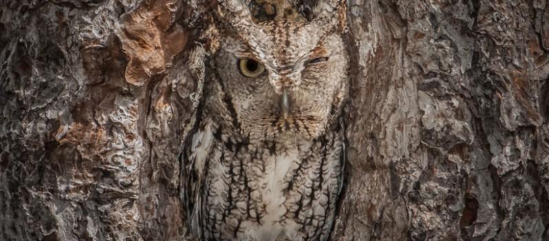 camouflage-Animal-1